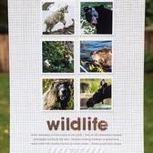 Wildlifesmall